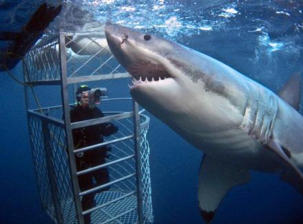 rodney-fox-shark